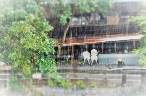 雨イメージ画像