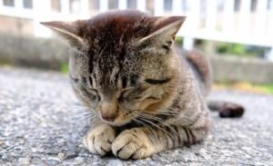 前足を付く猫の画像