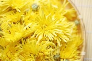 食用菊画像