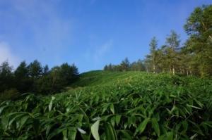 クマ笹の丘画像