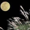 お月さま画像