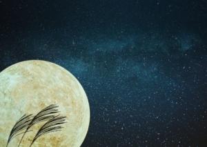 月見イメージ画像