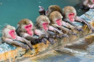 サルの写真