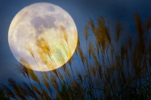 満月イメージ画像